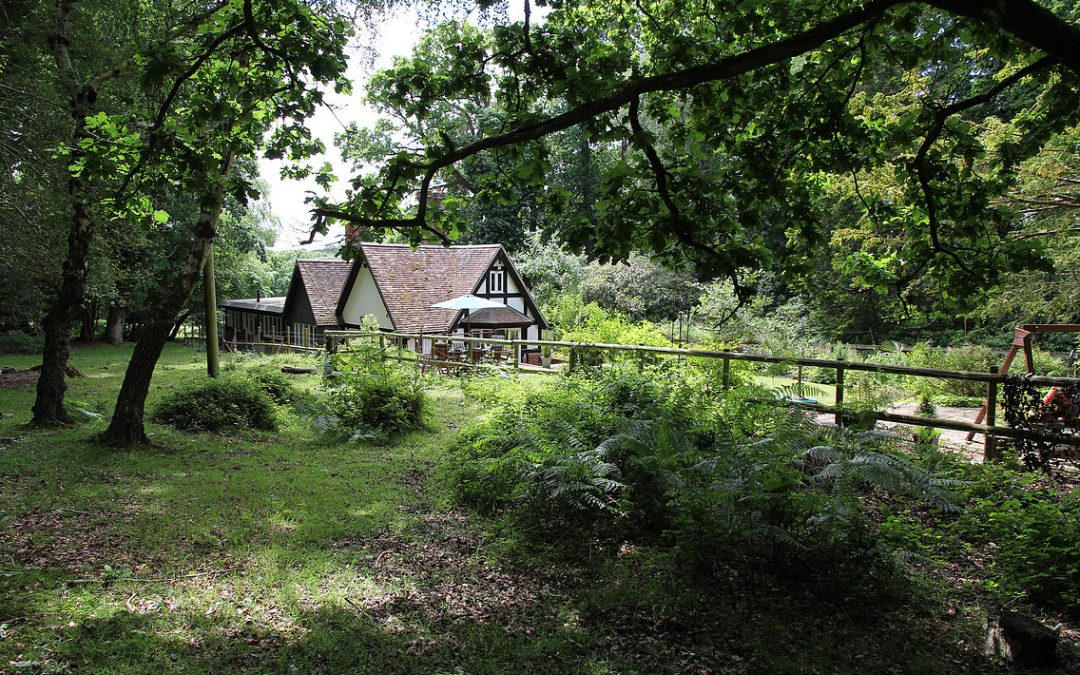 Tranquility of the New Forest could be the right place to gain clarity and develop your next business strategy